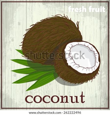 Hand drawing illustration of coconut. Fresh fruit sketch background. Vector illustration for your design - stock vector