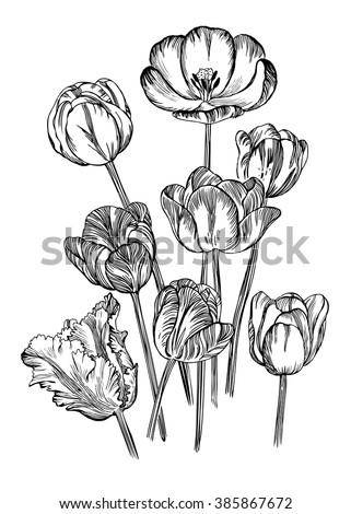 Hand drawing of spring flowers- tulips, rendering as vector illustration.