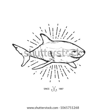 Hand drawing vector illustration - Shark. Isolated on white background