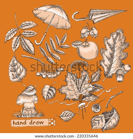 Hand drawing with autumn  design element