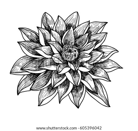 Hand drawn sketch lotus flower isolate stock vector hd royalty free hand drawn and sketch lotus flower isolate on white background mightylinksfo