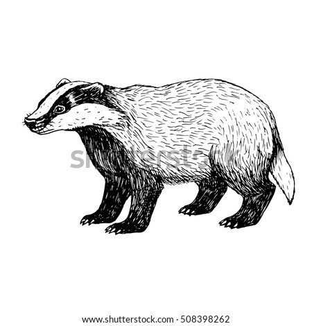Political argument in addition Gears moreover Grapevine likewise Badger moreover In Case Of Flood 24382966. on search illustrations