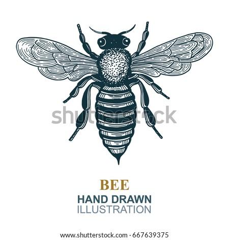 Hand Drawn Bee Vector Illustration Honey Logo Or Emblem Graphic Doodle Design