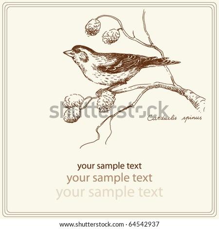 hand drawn bird - stock vector