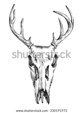 Hand drawn black and white illustration with deer scull  - stock vector