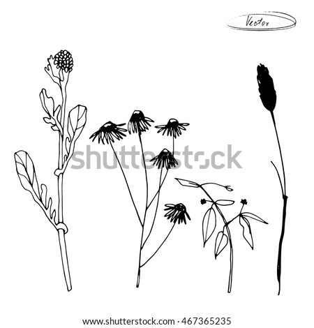 Hand Drawn Black And White Minimalist Sketches Of Field Grass Flowers Isolated On Background