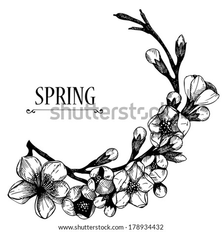 Hand drawn blooming  fruit tree twig. Vector design for your card or invitation with spring illustration. Isolated on white. - stock vector