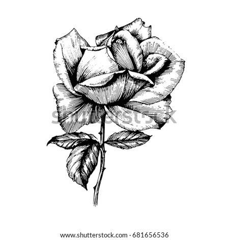 Hand drawn botanical art isolated on white background. Floral etching illustration. Flowers drawing vector illustration and line art for a black and white tattoo.