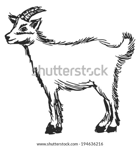 hand drawn, cartoon, sketch illustration of little goat