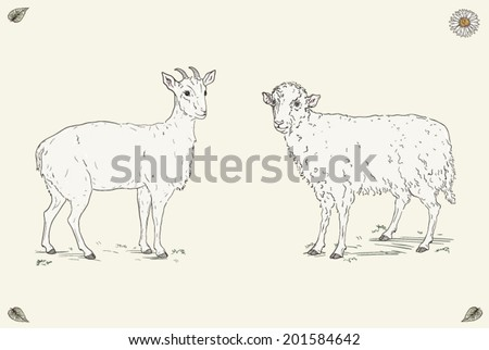 Hand drawn cheerful goat and happy sheep standing in the field. Ornate colorful illustration. Vintage engraving style - stock vector