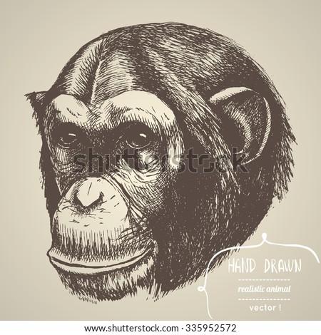 Hand drawn chimpanzee. Vector illustration. - stock vector