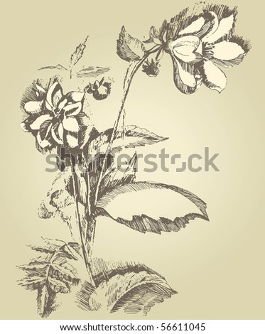 hand drawn dahlia - stock vector