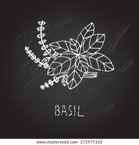 Hand drawn decorative basil, design element. Can be used for cards, invitations, gift wrap, print, scrapbooking. Kitchen theme. Chalkboard background. Herbs and spices sketch - stock vector