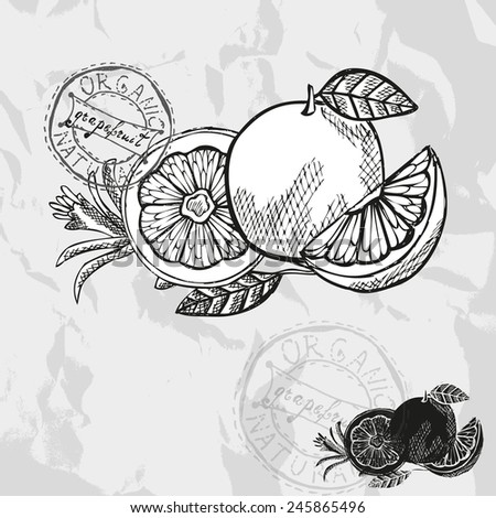 Hand drawn decorative grapefruits, design elements. Citrus collection. Can be used for cards, invitations, gift wrap, print, scrapbooking. Kitchen theme - stock vector