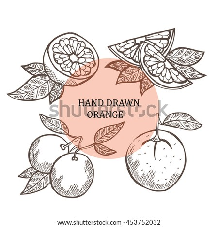 Hand drawn decorative oranges, design elements. Can be used for cards, invitations, scrapbooking, print, manufacturing. Fruit theme. Fruit sketch. Citrus - stock vector
