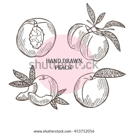 Hand drawn decorative oranges, design elements. Can be used for cards, invitations, scrapbooking, print, manufacturing. Fruit theme. Fruit sketch - stock vector