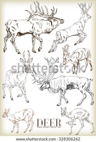 Hand drawn deer vector set - stock vector