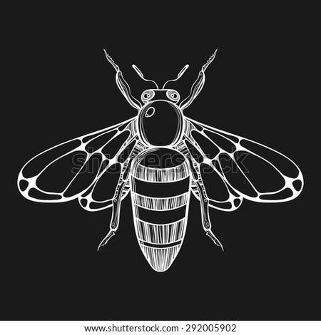 Hand drawn engraving Sketch of  Bee. Vector illustration for tattoo. - stock vector
