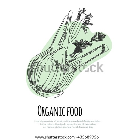 Hand drawn fennel over white background