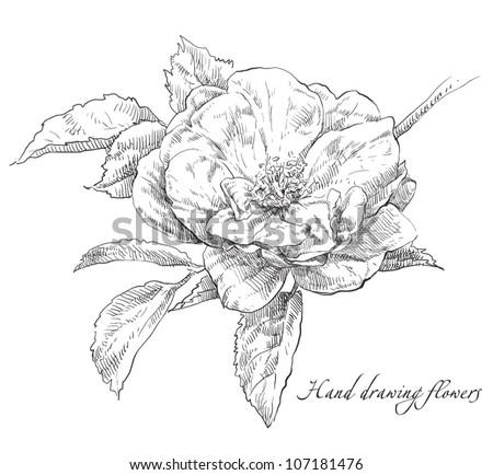 Hand drawn flower - stock vector
