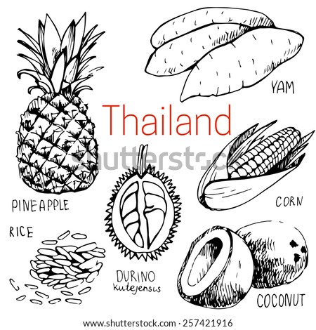Hand-drawn food in Thailand: yam, coconut, pineapple, corn, rice - stock vector