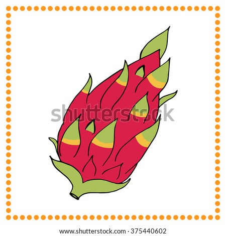Hand drawn fruits. Hand drawn dragon fruit. - stock vector