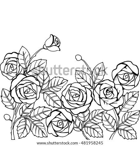 Hand Drawn Garden Roses Anti Stress Stock Vector 481958245