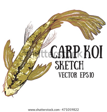 Hand-drawn  illustration of couple of red Koi carps fishes in the water. Gold carp Koi sketch