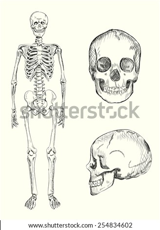 Hand drawn illustration of human skeleton and skull. Vector eps10. - stock vector