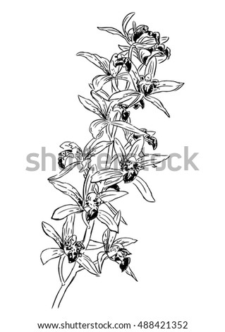 hand drawn illustration of orchid. sketch of botanical, isolated realistic flower