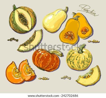 Hand drawn illustration of pumpkin. Vector realistic illustration. - stock vector