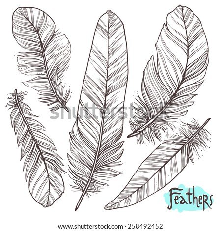 Hand drawn illustrations of feathers - stock vector