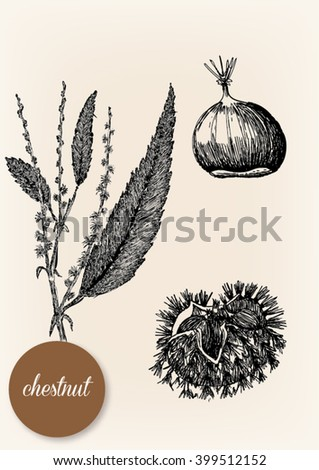 Hand drawn image of a chestnut with its leaves and stalk - stock vector