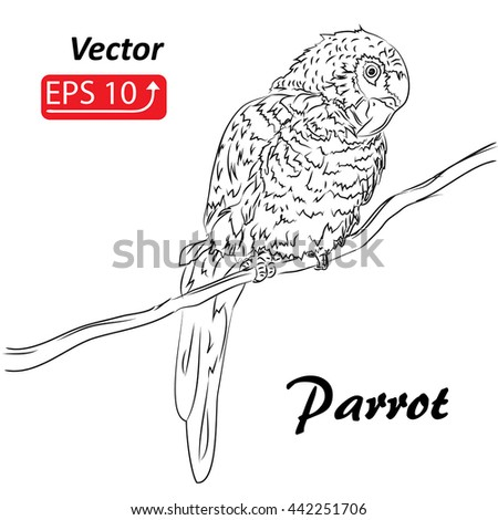 Hand drawn ink sketch of parrot sitting on a tree branch, isolated on white, vector illustration