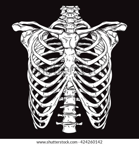 Hand drawn line art anatomically correct human ribcage. White over black background vector illustration. Print design for t-shirt or halloween costume - stock vector