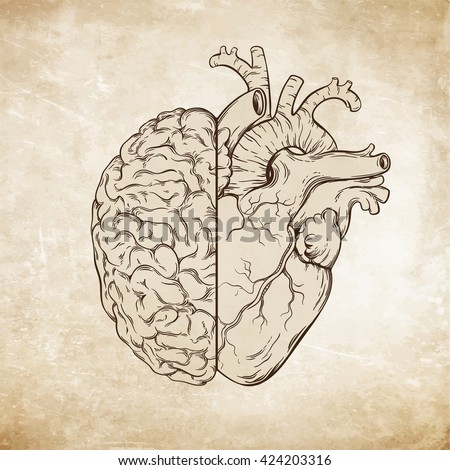 Hand drawn line art human brain and heart. Da Vinci sketches style over grunge aged paper background vector illustration. Logic and emotion priority concept.  - stock vector