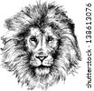 hand drawn lion head - stock vector