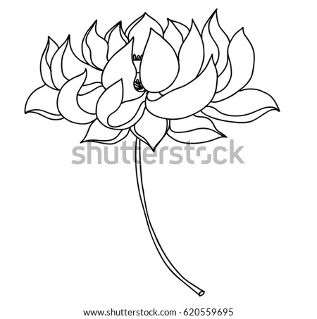 Hand drawn lotus flower tattoo design stock vector 620559695 hand drawn lotus flower for tattoo design mightylinksfo Gallery