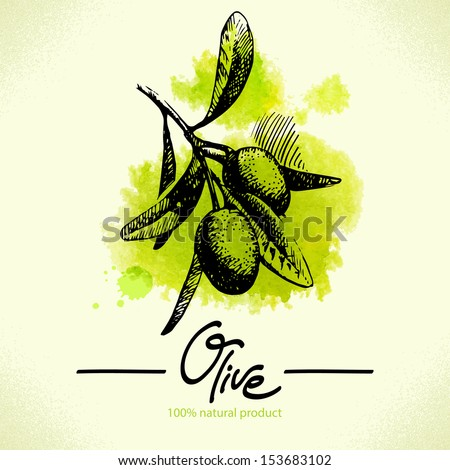 Hand drawn olive illustration with watercolor back  - stock vector