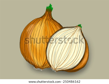 Hand drawn onion. Vector version - stock vector