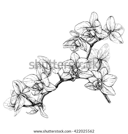 Hand drawn orchid branch. Black and white vector illustration isolated on white