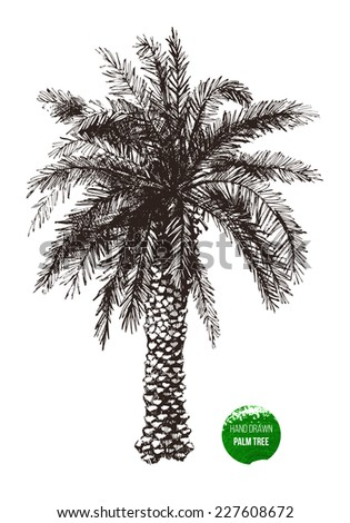 Hand drawn palm tree in retro style - stock vector