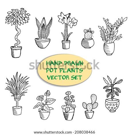 Hand drawn pot plants vector set - stock vector