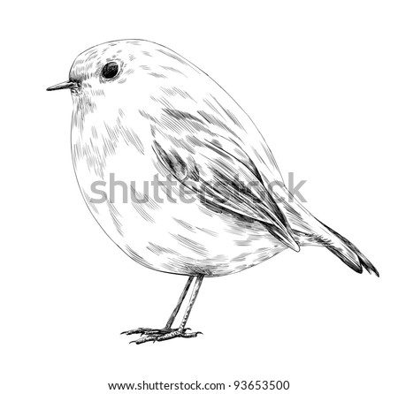 Hand-drawn robin. Vector illustration.