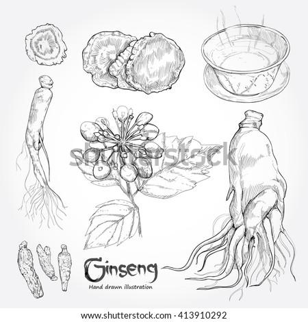 hand drawn set illustration of ginseng