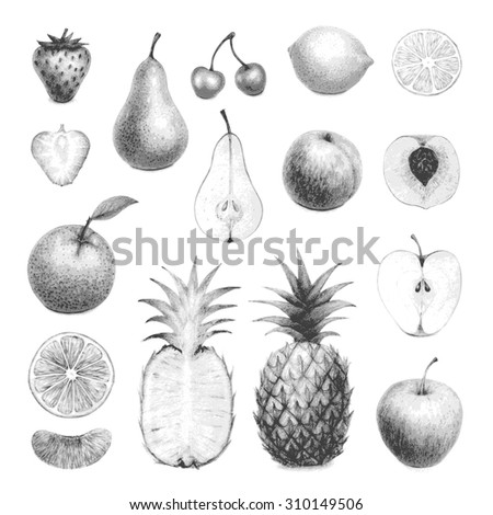 hand drawn set of detailed fruits - stock vector