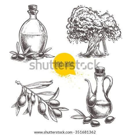 Hand drawn set of olive branch with olives, bottles with olive oil and olive tree. Sketch style vector organic food illustration. - stock vector