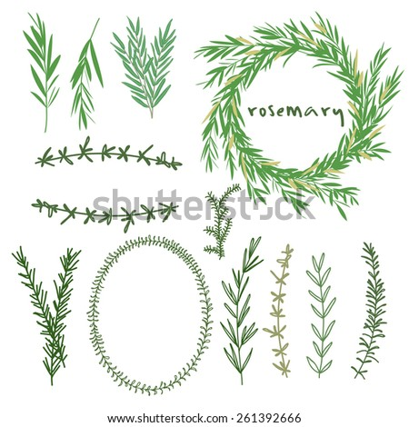 Hand drawn set of rosemary flowers, wreaths and decoration elements. vector illustration - stock vector
