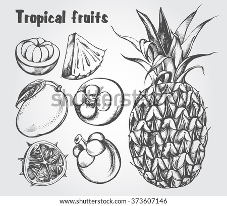 Hand drawn set of tropical fruits - mango, mangosteen, kiwano, pineapple. Vector isolated illustration.