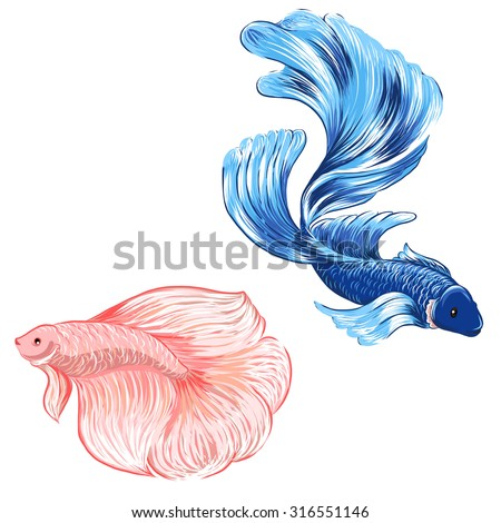 hand drawn siamese fighting fish,isolate vector set